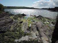 Excursión por la orilla desde Charles Fort